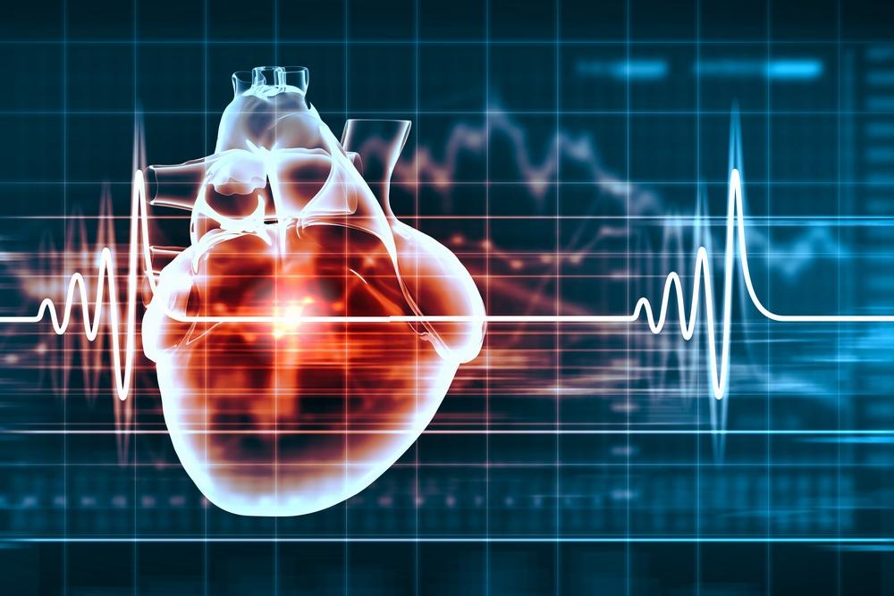 Virtual image of human heart with cardiogram-1